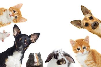 Tierfutter, Heimtierbedarf