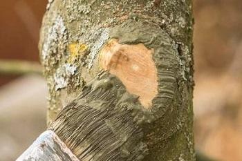Veredelungsmittel, Baumpflege
